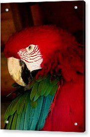 Red And Green Wing Macaw Acrylic Print