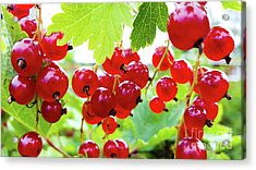 Red And Ripe Acrylic Print