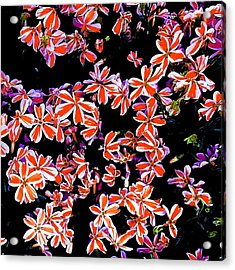 Red And White Flowers Acrylic Print