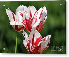 Red And White Stripes Acrylic Print