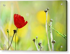 Red And Yellow Acrylic Print by Guido Montanes Castillo
