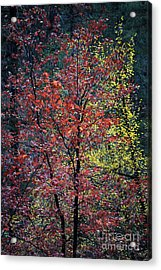 Red And Yellow Leaves Abstract Vertical Number 1 Acrylic Print by Heather Kirk