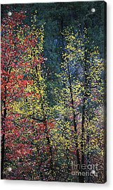 Red And Yellow Leaves Abstract Vertical Number 2 Acrylic Print by Heather Kirk