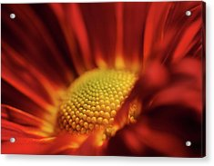 Acrylic Print featuring the photograph Red And Yellow by Sheryl Thomas