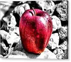 Red Apple Acrylic Print by Karen M Scovill
