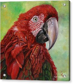 Red  Ara Chloropterus Macaw Acrylic Print by Svetlana Ledneva-Schukina