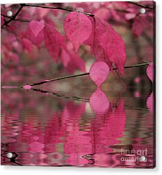 Red Autumn Leaf Reflections Acrylic Print by Judy Palkimas