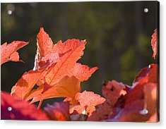 Red Autumn Acrylic Print