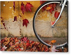 Acrylic Print featuring the photograph Red Autumn by Yuri Santin