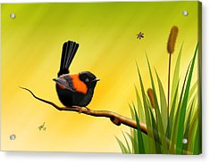 Acrylic Print featuring the digital art Red Backed Fairy Wren by John Wills