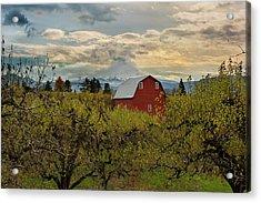 Red Barn At Pear Orchard Acrylic Print