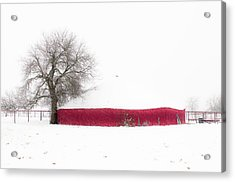 Red Barn In Winter Acrylic Print by Tamyra Ayles