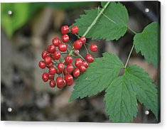 Red Bead Acrylic Print by Alan Rutherford