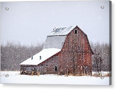 Red Beauty In Snow Acrylic Print