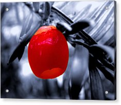 Nature Acrylic Print featuring the photograph Red Bell by Roberto Alamino