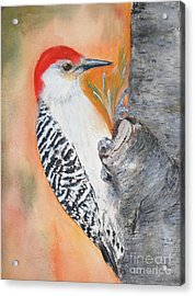 Red Bellied Male Woodpecker Acrylic Print