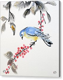 Red Berries Blue Bird Acrylic Print
