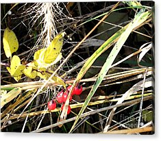 Red Berries Acrylic Print by Gary Everson
