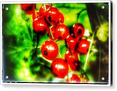 Acrylic Print featuring the photograph Red Berries by Isabella F Abbie Shores FRSA