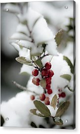 Red Berries Acrylic Print by Jill Smith
