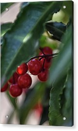 Red Berry Acrylic Print