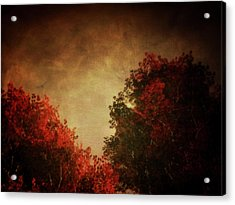 Red Birch With Textured Sky Acrylic Print by Jan Keteleer