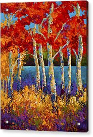 Red Birches Acrylic Print by Marion Rose