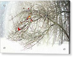 Acrylic Print featuring the digital art Red Bird Convention by Sue Collura