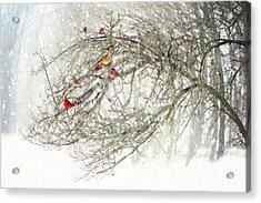 Red Bird Convention Acrylic Print