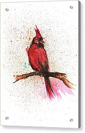 Red Bird Acrylic Print by Remy Francis