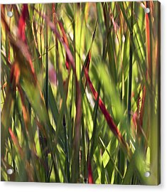 Red Blades Among The Green Acrylic Print