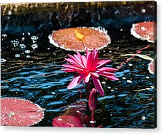 Red Blossom Water Lily Acrylic Print