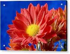 Red Blue Contrast Acrylic Print by Kenneth Johnson