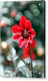 Red Bokeh2 Acrylic Print by Carolyn Stagger Cokley