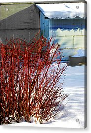 Red Branches And Snow Acrylic Print by Barbara  White