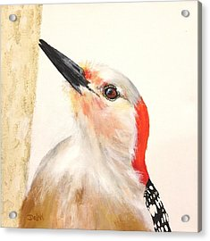 Red Breasted Woodpecker Acrylic Print