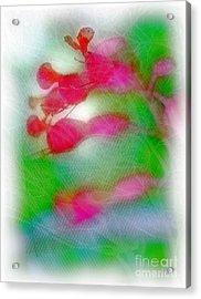 Red Buckeye Acrylic Print by Judi Bagwell