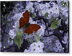 Red Butterfly On Cherry Blossoms Acrylic Print by Garry Gay