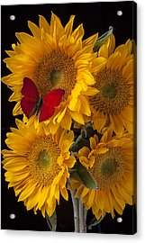Red Butterfly With Four Sunflowers Acrylic Print by Garry Gay