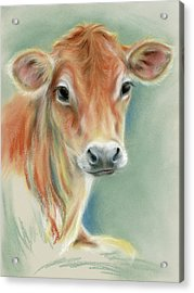 Red Calf Portrait Acrylic Print
