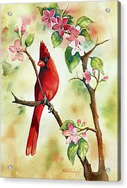 Red Cardinal And Blossoms Acrylic Print