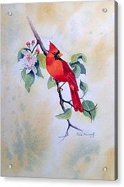 Red Cardinal  Acrylic Print