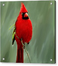 Red Cardinal Painting Acrylic Print by Bob and Nadine Johnston