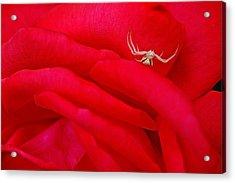 Red Carpet Acrylic Print by Mark Lemon