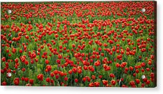 Acrylic Print featuring the photograph Red Carpet by Tom Vaughan