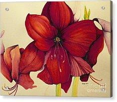 Red Christmas Amaryllis Acrylic Print