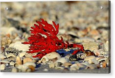 Red Coral Acrylic Print