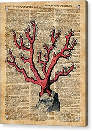 Red Coral Vintage Illustration Dictionary Art Acrylic Print by Jacob Kuch