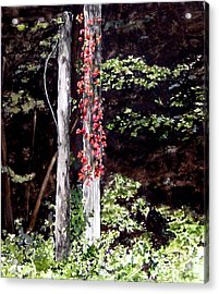 Red Creeper Acrylic Print by Carla Dabney