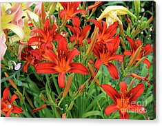 Red Daylilies Acrylic Print